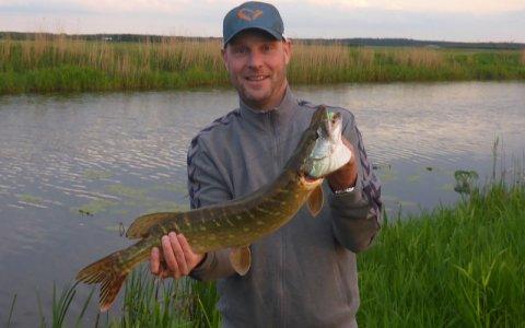 rovfisk i danske søer
