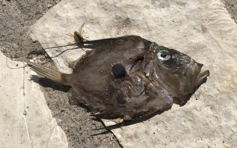 john dory sivota harbour angeln greece fishing